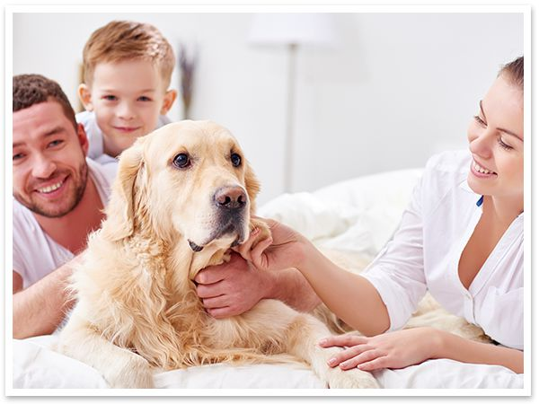 reston va air cleaners purifiers